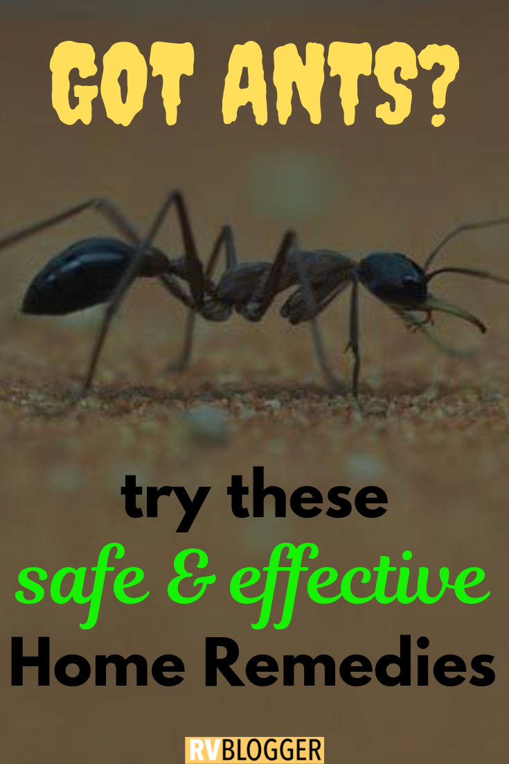 7 Incredibly Effective Home Remedies To Get Rid of Ants