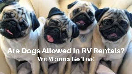 Are Dogs Allowed In RV Rentals?