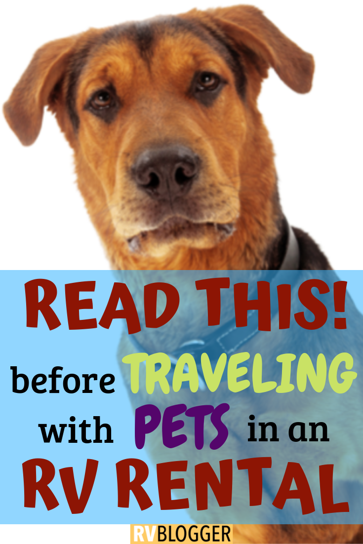 Are Dogs Allowed in an RV Rental