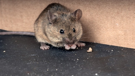 Do Dryer Sheets Keep Mice Away From RVs and Campers?