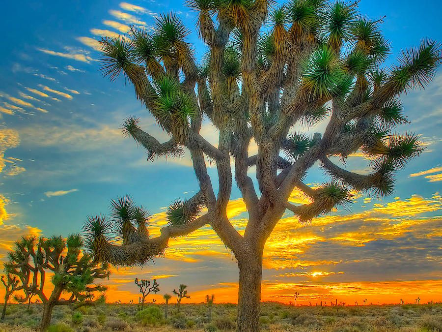 Ultimate Guide to RV Camping and Campgrounds in Joshua Tree